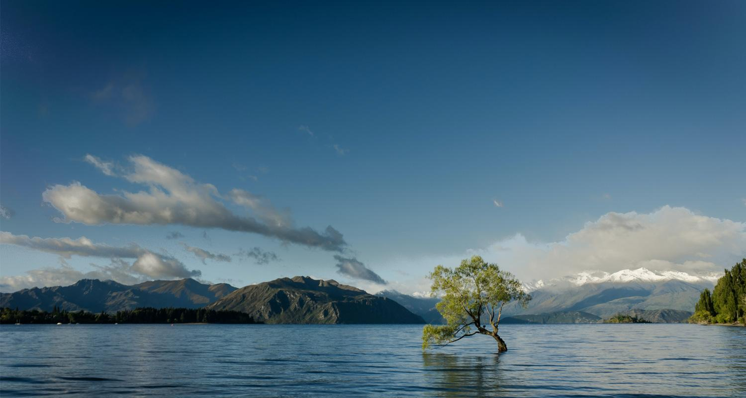 Tree in flooded field